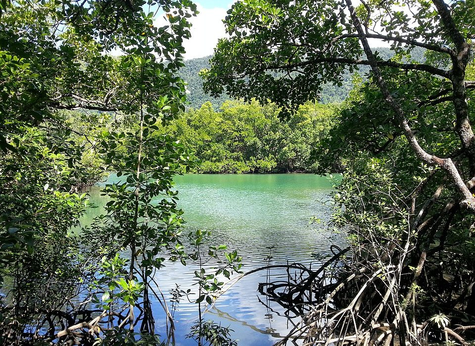 Daintree-National-Park-Queensland