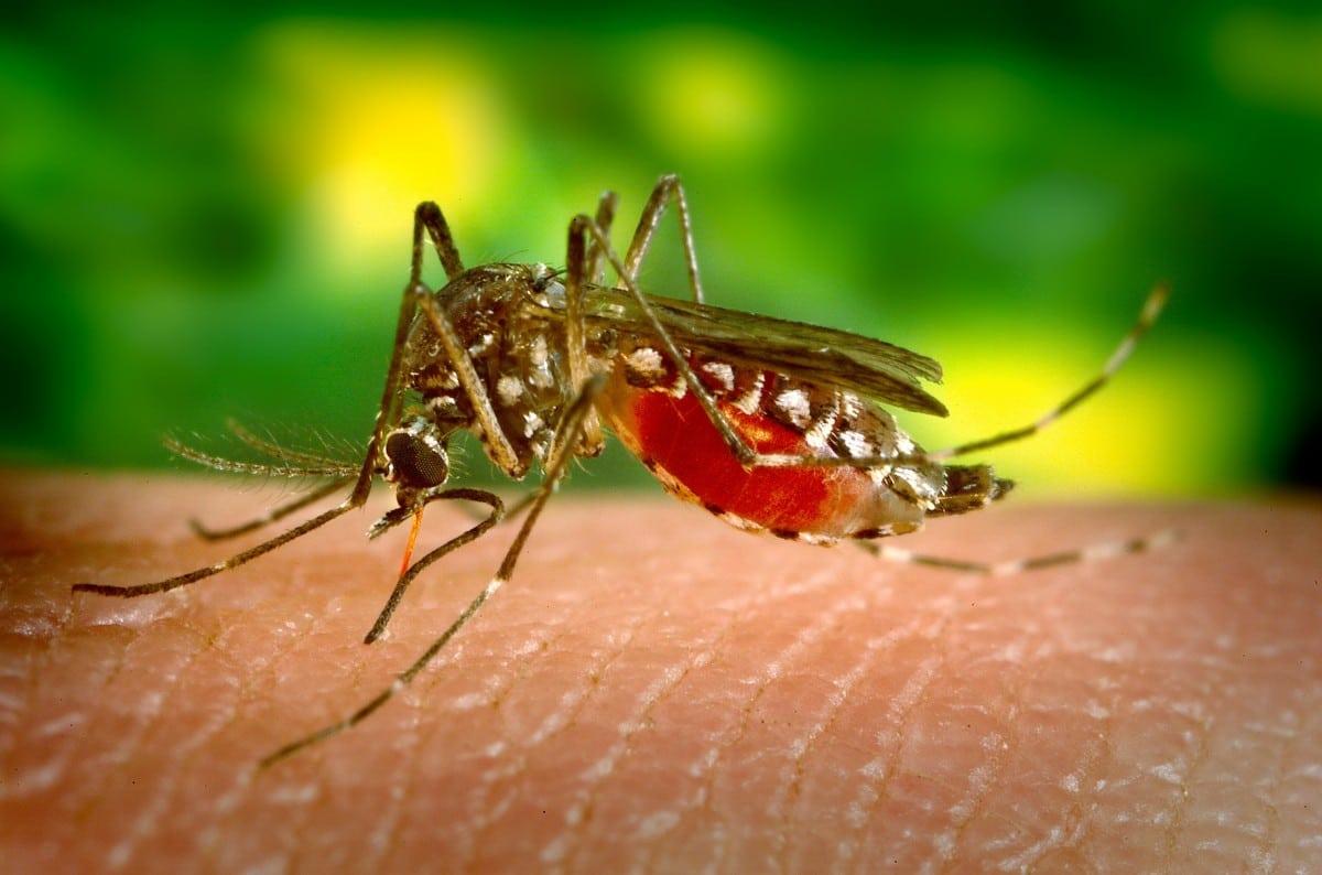 débarrasser moustique